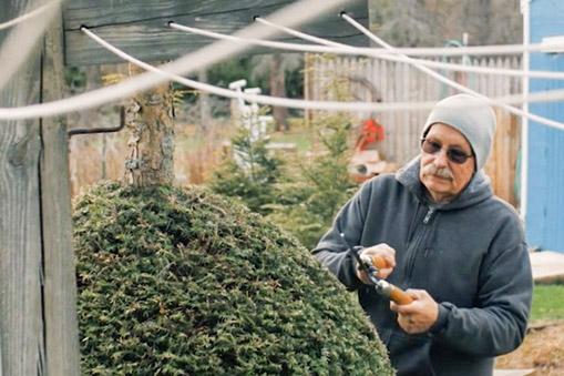 Bruce trimming a bush